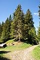 Furx-weather spruce-01ASD.jpg