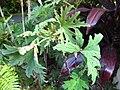 Gardenology.org-IMG 1278 rbgs10dec.jpg