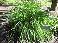 Gardenology.org-IMG 2100 hunt0903.jpg