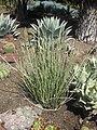 Gardenology.org-IMG 2189 hunt0903.jpg