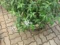 Gardenology.org-IMG 8059 qsbg11mar.jpg