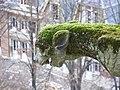 Gargouille Amiens 4.jpg