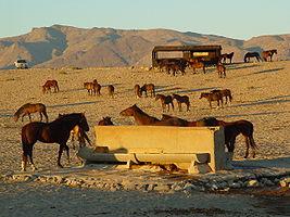 Garub hide wild horses 2005-06 telane greyling.JPG