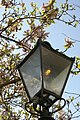 Gas lamp in Little St Mary's lane - geograph.org.uk - 492773.jpg