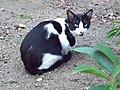 Gato callejero en Madrid 01.jpg