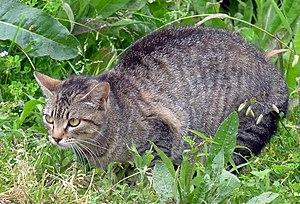 """A homeless """"feral"""" cat."""