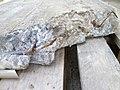 Gewapend beton van Villa Jongerius.jpg