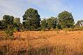 Gfp-wisconsin-buckhorn-state-park-buckhorn-barrens.jpg