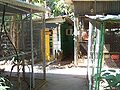 Ghi, pettingzoo (rabbit, parrot compound, office).jpg