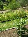 Giardino botanico di Brera (Milan) 308.jpg
