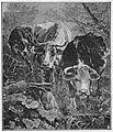 Glaspalast 1888 016.jpg