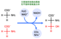 Glycin-serin.png