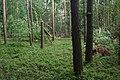 Gmina Nędza zniszczony las przy drodze 919 2017-07-09 p.jpg