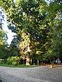 Gołuchów - panoramio (5).jpg