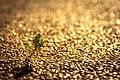 Golden Bokeh (112490473).jpeg