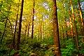 Golden Forest (2917855340).jpg