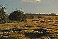 Golden barley and Billinge Hill - geograph.org.uk - 889314.jpg