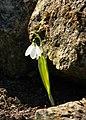 Gradina Botanica (8546269058).jpg