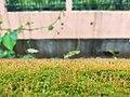 Grass grass.jpg
