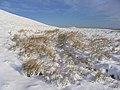 Grasses on Din Fell - geograph.org.uk - 320807.jpg