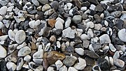 Gravel road (close-up).jpg