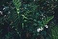 Green ferns and white flowers (Unsplash).jpg