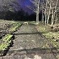 Greenhead Moss Community Nature Park - panoramio (19).jpg