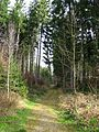 Grenze Forst Kasten Forstenrieder Park.jpg