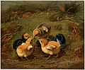 Group of Chickens (Boston Public Library).jpg