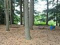 Grove Park (Natick, Massachusetts) - DSC09525.JPG