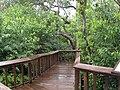 Gumbo-limbo-plank-trail.jpg