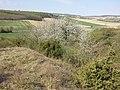 Halbtrockenrasen südöstlich von Traunfeld sl4.jpg