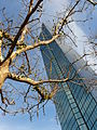 Hancock tower with tree.jpg