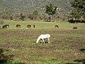 Haras Sausalito. - panoramio - R.A.T.P..jpg