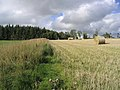 Harvest field and set aside strip - geograph.org.uk - 238947.jpg