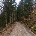 Hauptmannswaldweg Rammert Tübingen Bühl.jpg