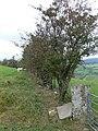 Hawthorn Hedge - geograph.org.uk - 568337.jpg