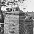 Hekpijlerbekroning, detail - Leiden - 20337898 - RCE.jpg