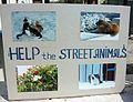 Help the street animals, Santorí.JPG