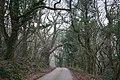Hemyock, lane to Hackpen Hill - geograph.org.uk - 115778.jpg