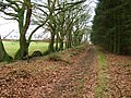 Henley Wood Path - geograph.org.uk - 685421.jpg