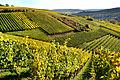 Herbstlicher Spaziergang durch die Becksteiner Weingärten. 14.jpg