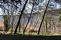 Hidden Behind Trees (200964193).jpeg