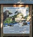 Hinweisschild im Tegeler Fließ, Berlin zu den dortigen Wasserbüffeln.jpg