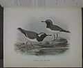History of the birds of NZ 1st ed p214-2.jpg