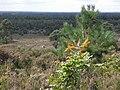 Holterberg - 2009 - panoramio (1).jpg