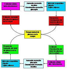 Homeostasis - Wikipedia, la enciclopedia libre