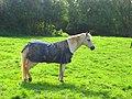 Horse (4158905089).jpg