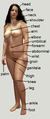 Human body of female.png