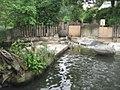 Humboldtpinguin - geo.hlipp.de - 6285.jpg